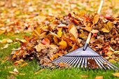 stock photo of piles  - Pile of fall leaves with fan rake on lawn - JPG