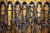 Leather horse bridles and bits hanging on wall of stable