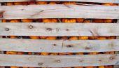 Orange Pumpkins in a wooden crate
