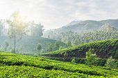 Kerala India travel background - green tea plantations in Munnar, Kerala, India in the morning on sunrise