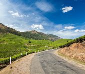 Kerala India travel background - road in green tea plantations in mountains in Munnar, Kerala, India