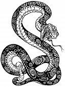 snake black and white