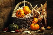 image of corn  - Autumn composition  - JPG