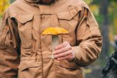 Orange-cap boletus Mushroom in man hand outdoor Lifestyle concept and autumn season organic food