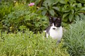 Kitten Sitting In Rockery