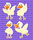 Illustration of a set of duck with background