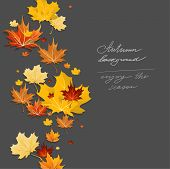 Autumn design on dark background. Place for text