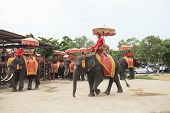 Ayuthaya Thailand-september 6 : Elephant For Tourist Riding Ready For Tourist Service In Ayuthaya Wo
