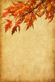 old paper with autumn leaves