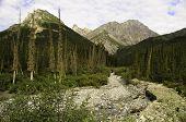 Wild wilderness Alaska