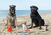 Three Dogs On The Beach