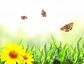 Green grass and butterflies. Isolated on white background