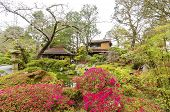 ������, ������: Japanese Tea Garden San Francisco