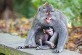 Protective Female Monkey