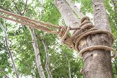 The Rope Tied To A Tree