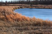 Beautiful blue pond with dry grass around it
