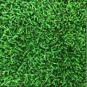 Grass Texture, Vector Illustration