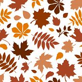 Seamless pattern with various brown autumn leaves on white. Vector illustration.