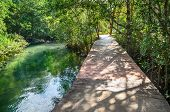 Wooden Bridge Through Vibrant Green Mangrove Forest And River With Turqouse Water