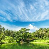 Paradise Lake With Palm Trees And Blue Sky. Tropical Nature Landscape