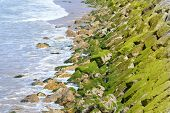 Green moss on the big stones by the ocean
