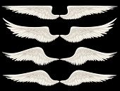 pic of cherubim  - Digital illustration of angel wings - JPG