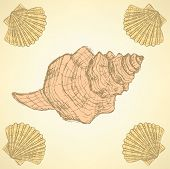 Sketch Sea Shells In Vintage Style