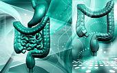 foto of excretory  - Digital illustration of human digestive system in colour background - JPG