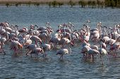 Flamingoes in Dubai