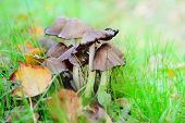 pic of toadstools  - Close up of toadstools growing among vegetation