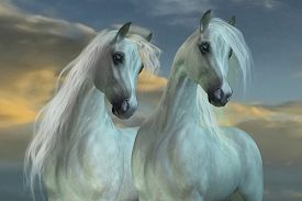 foto of workhorses  - The Arabian horse breed was developed in the deserts of the Arabian Peninsula - JPG