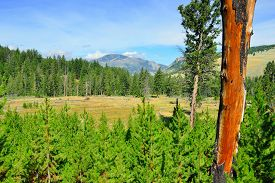 pic of blacktail  - Blacktail Plateau in Yellowstone National Park Wyoming in summer - JPG