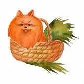picture of pomeranian  - Watercolor pomeranian spitz in wicker basket - JPG