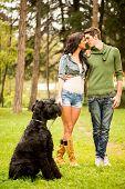 stock photo of heterosexual couple  - Young beautiful heterosexual couple with a black giant schnauzer enjoy a walk through the park - JPG