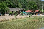 picture of house woods  - traditional korean country farm house with a small rice paddy out in the front - JPG