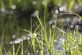 stock photo of marsh grass  - green grass on the bank of a pond - JPG