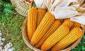 image of sweet-corn  - image of A basket of dry sweet corn  - JPG