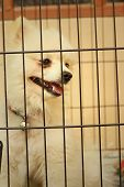 stock photo of caged  - Pomeranian puppy in a cage at the park - JPG