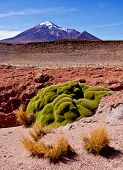 stock photo of vegetation  - Vegetation in high altitude - JPG