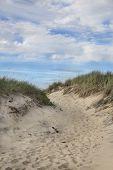 pic of martha  - Beach on Martha - JPG