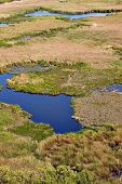 pic of swamps  - Detail of a swamp wet landscape - JPG