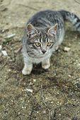 foto of homeless  - Homeless cat outdoors - JPG