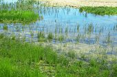 stock photo of marsh grass  - Pond with grass as background - JPG