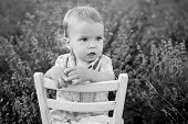 picture of lavender field  - Toddler baby boy in a lavender field sits on a chair ( black and white ) ** Note: Shallow depth of field - JPG