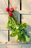 picture of radish  - Tree pink radishes on wooden box in garden - JPG