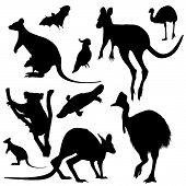 picture of platypus  - collection of Australian animals black vector silhouettes - JPG