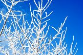 Frosted Branches Against Blue Sky