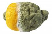 pic of penicillium  - Rotten lemon on a white background - JPG