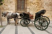 Horses And Carriage For Sightseeing