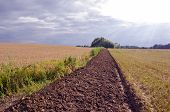 Summer End Tillage Trench In The Crop Field